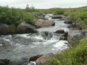 Где ловить форель на поплавок
