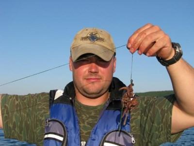 Ловля сома на червя-выползка